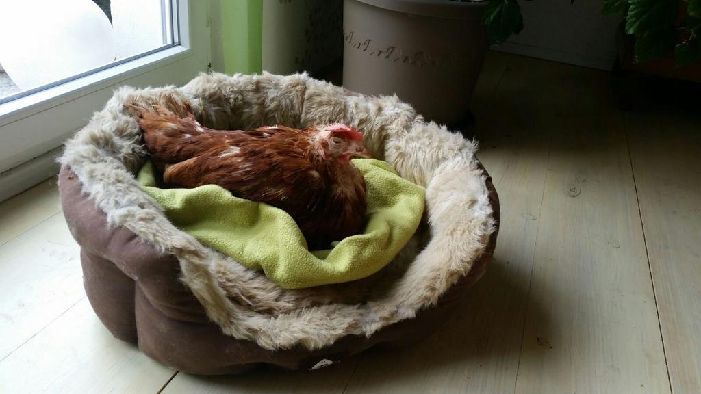Rettet das Huhn - Bild 5