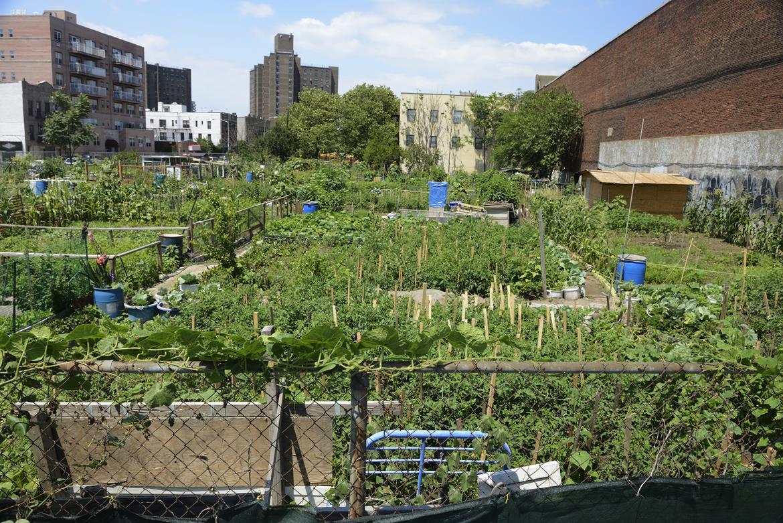 Urban-Gardening - Bild 2