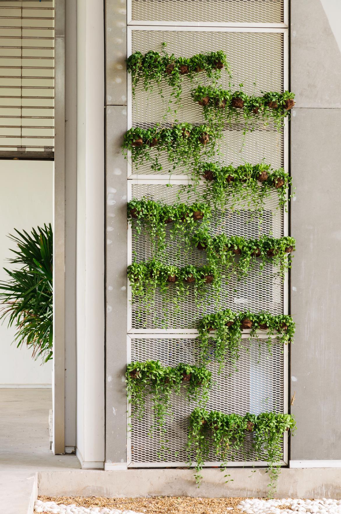 Indoor Gardening - Bild 2