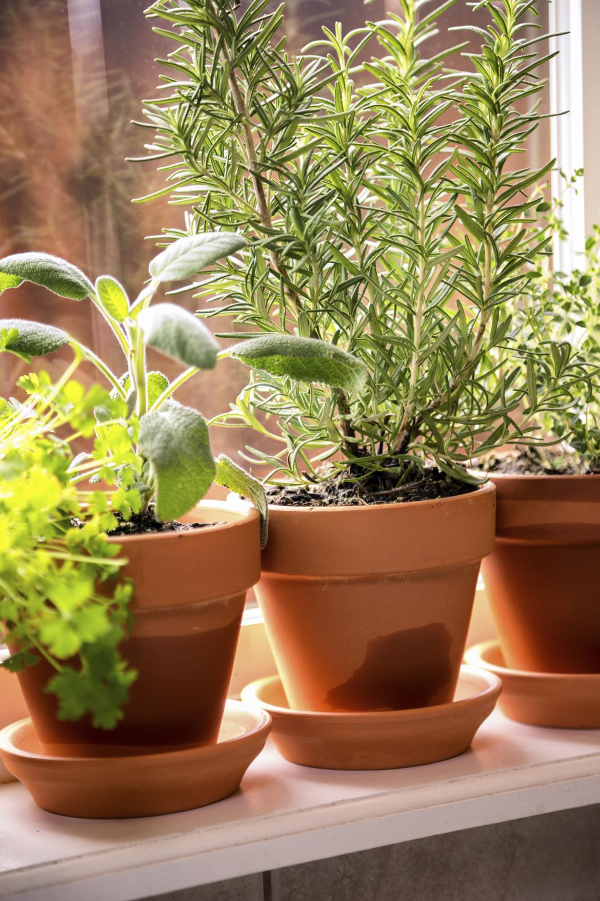 Topfpflanzen auf Fensterbank