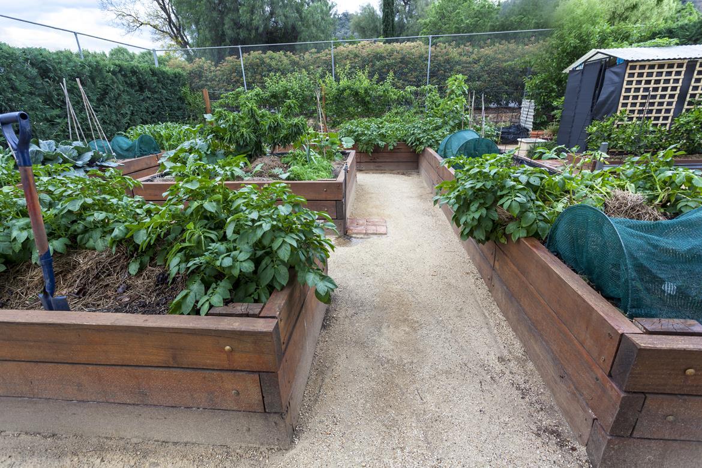 Urban Gardening - Bild 4