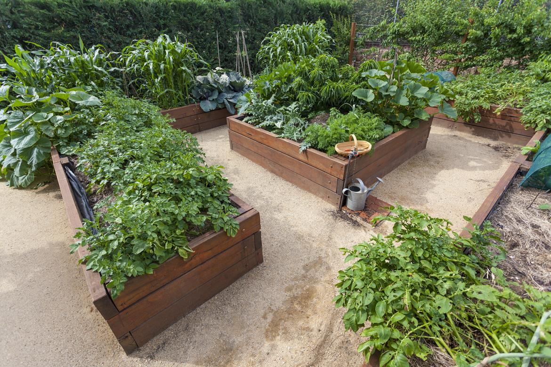 Urban Gardening - Bild 3