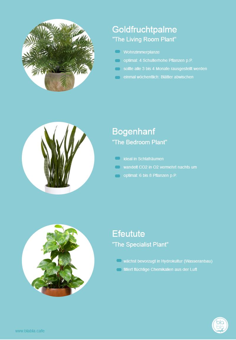 Diese Pflanzen tun dir richtig gut-Infografik