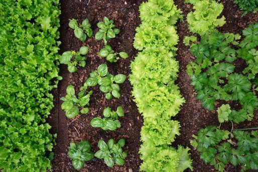 Dein persönlicher Gemüsegarten