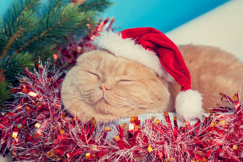 Warum feiern wir eigentlich Weihnachten - Weihnachtskatze