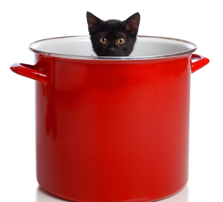 Katze im Kochtopf